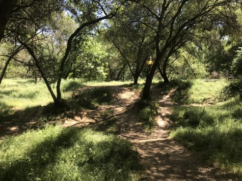 A mountain bike jump track Gauthier found located near William B. Pond off of the American River Bike Trail.
