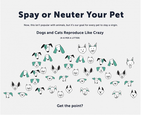 Spaying and Neutering: The Undisputed Answer